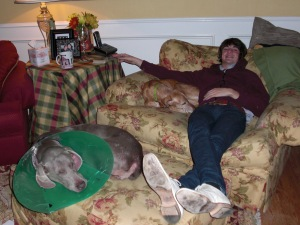 Asian Rock Star Napping with the dogs