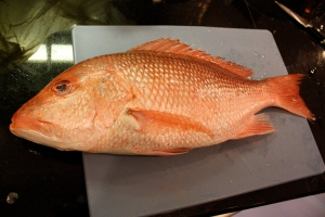 Red Snapper Naked and lonely